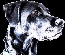 Hond in de footer
